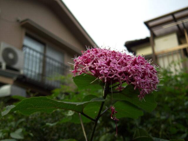 Pentax Q7で撮影した花