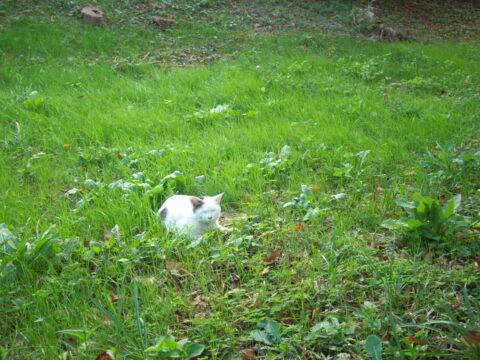 Pentax Q7で撮影した猫