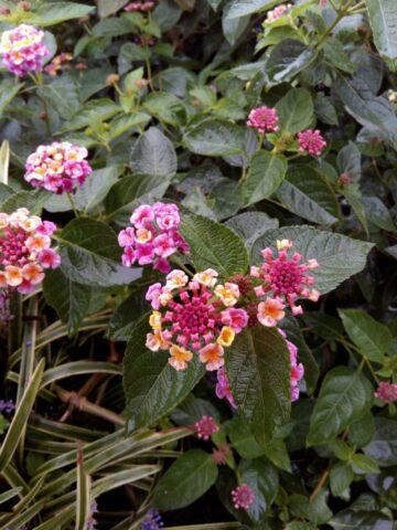 SAMURAI 雅(miyabi)で撮影した花