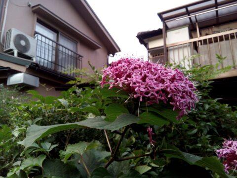 FREETEL SAMURAI 雅(MIYABI)で撮影した花