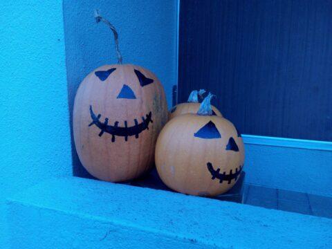 FREETEL SAMURAI 雅(MIYABI)で撮影したかぼちゃ その1