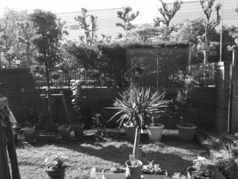 Mate9のモノクロカメラで撮影した画像