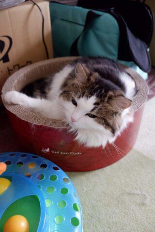 FUJIFILM XF10 で撮影した猫
