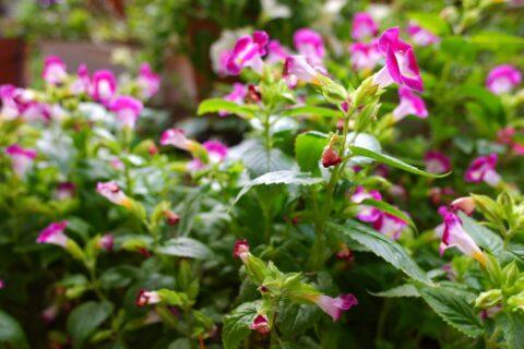 FUJIFILM XF10 で撮影した植物